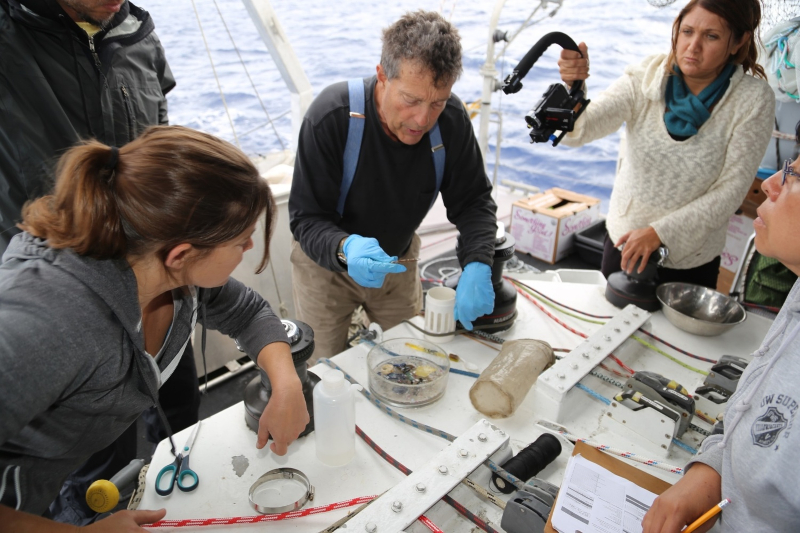 Captain Charles Moore looking at plastic found in the Pacific Ocean, Great Pacific Garbage Patch